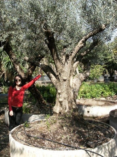 Garden Centre: Garden Centres Malta