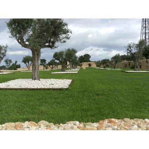 Garden Centre: Derek Garden Centre , Hal Qormi, Malta, +356 2144 9754