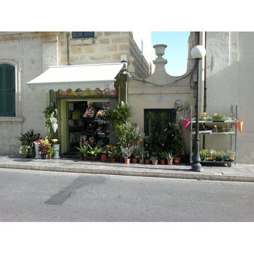 Garden Centre: Ta Nena Pet & Garden Centre, Iz-Zejtun, Malta, +356 2740